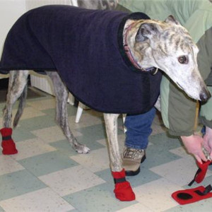 Sew Your Own Winter Dog Boots