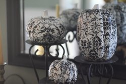 Fabulous Pumpkins In Black and White
