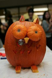 Adorable Carved Owl Pumpkin
