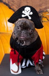 Pirate Puppy Crochet Hat Pattern