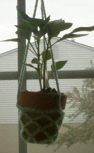 Mini Crochet Plant Hangers