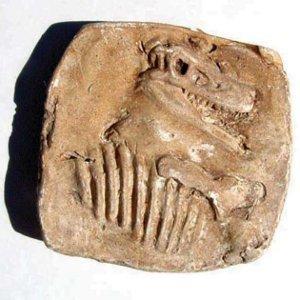 Dig Up Dinosaur Fossils