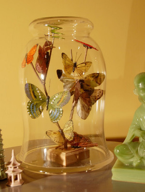 Bottled Butterflies