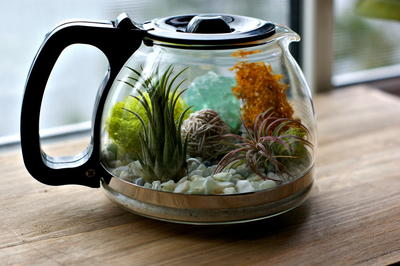 Coffee Pot Homemade Terrarium