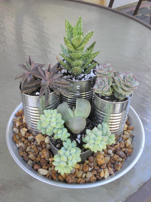 Super Easy Succulent Garden