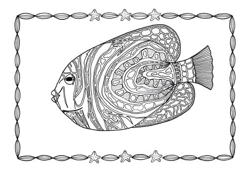 Angelfish Adult Coloring Page