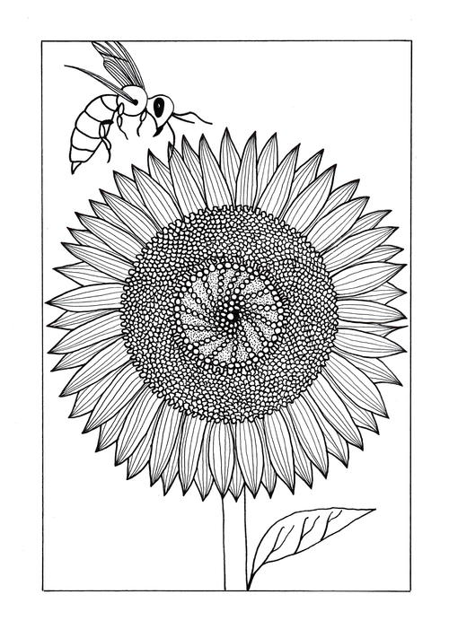 Vividly Intricate Sunflower Adult Coloring Page