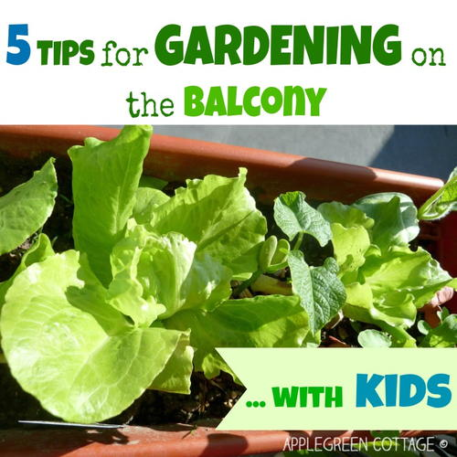 5 Tips To Start Gardening On the Balcony - With Kids