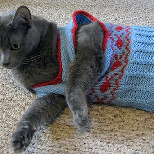 Knitting Pattern For Cat Sweater : Preppy Cat Vest AllFreeKnitting.com