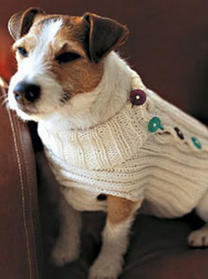Knit A Button Up Dog Sweater Allfreeknitting