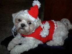 Santa Paws Crochet Dog Outfit