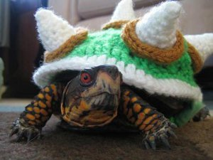 Bowser turtle sweater allfreecrochet this bowser turtle sweater is unlike anything you have ever seen everybody has seen a dog prance around in a sweater and sometimes a rare cat even sports dt1010fo