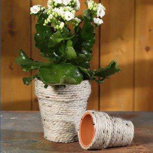 Neat and Natural Flower Pot