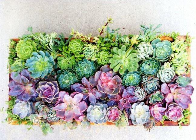 Rainbow Succulent Centerpiece Allfreediyweddings Com