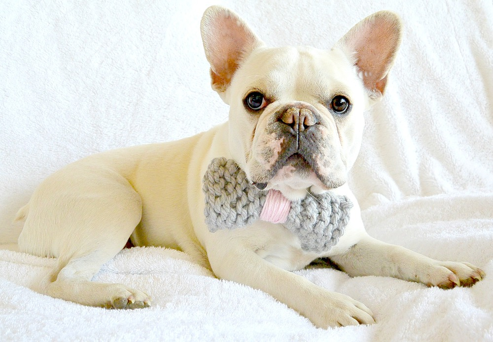 Knit Bow Tie Dog Collar Free Knitting Pattern | FaveCrafts.com