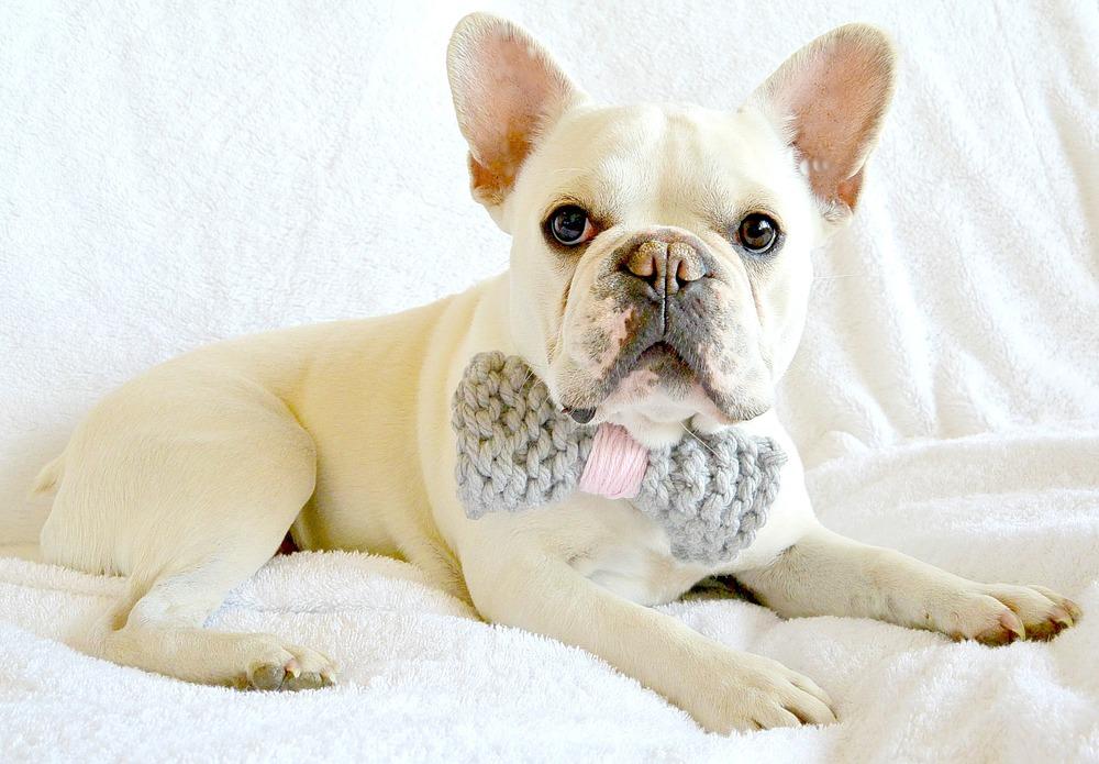 Simply Adorable Dog Bow Tie and Pom Collar | AllFreeKnitting.com