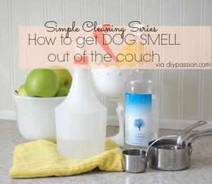 How to Get Dog Smell Out of Couch