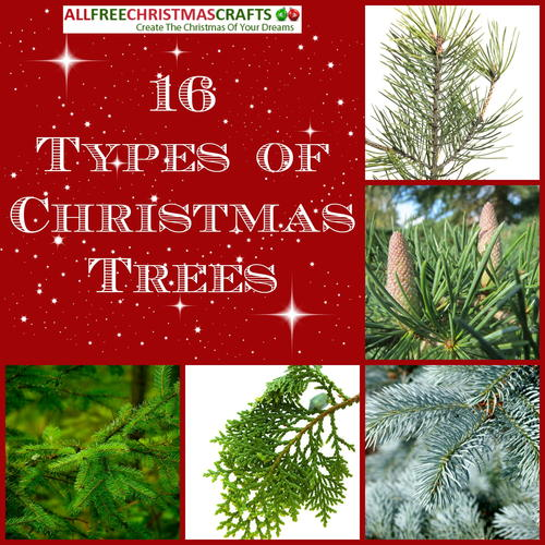 16 Types Of Christmas Trees
