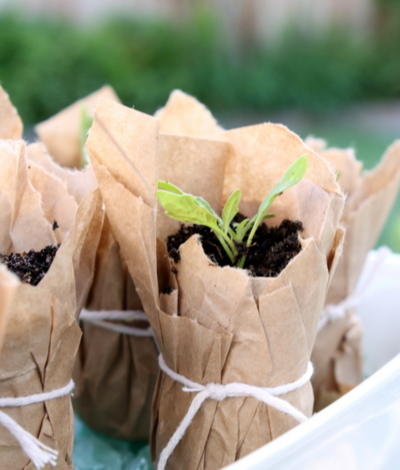 Recycled Paper Seedling Planter