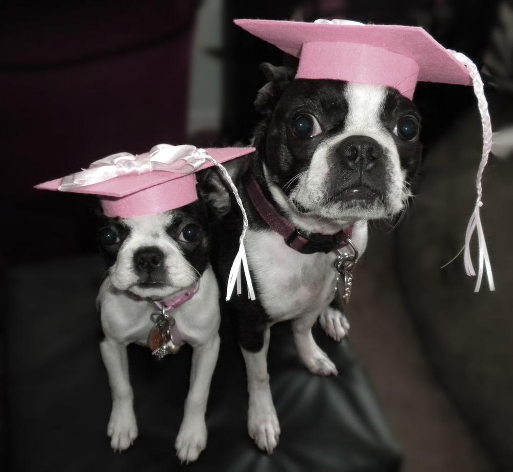 Pet Graduation Caps Favecrafts Com