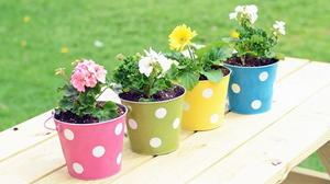 Polka Dot DIY Planters