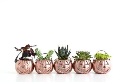 Pumpkin Planter Halloween Ideas
