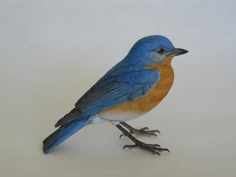eastern bluebird part one wildfowl carvingcom