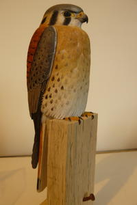 The Littlest Falcon, Part Two: Painting The American Kestrel