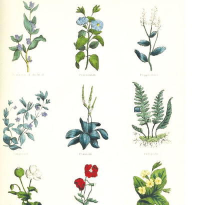 Vintage Herbs Printable Scrapbook Paper Allfreepapercrafts