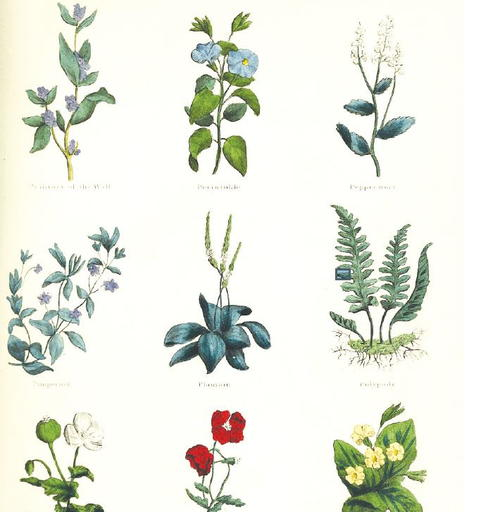 Vintage Herbs Printable Scrapbook Paper