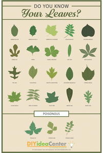 Leaf Identification Guide [Infographic]