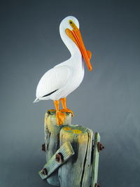 American White Pelican, Part One