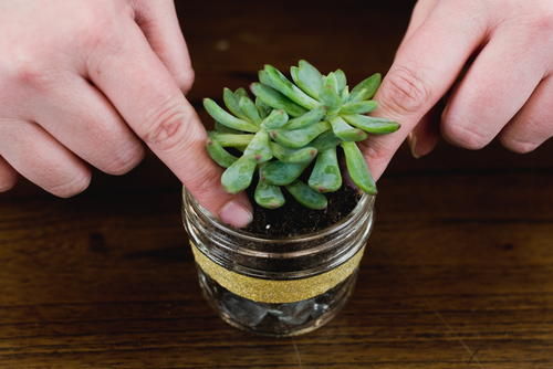 How to Plant a Succulent