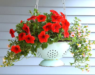 Country Cottage Colander Hanging Basket Planter