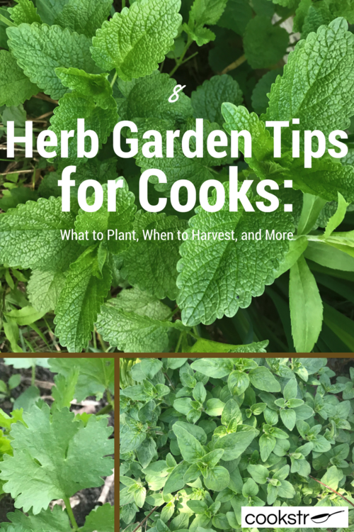 8 Herb Garden Tips For Cooks What To Plant When To Harvest And More