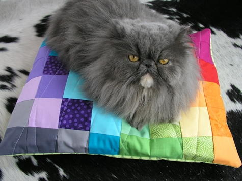 Color Spectrum DIY Pet Bed