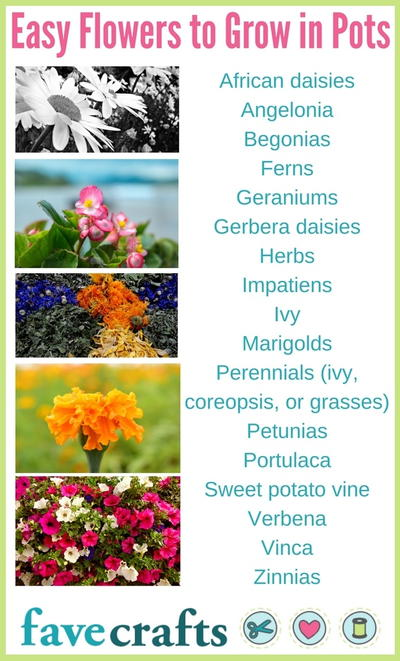 Easy Flowers to Grow in Pots