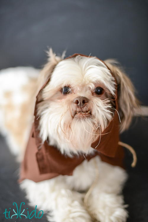 DIY Ewok Costume for Dogs