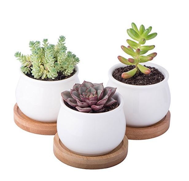 3-Piece Mini Planter Pots