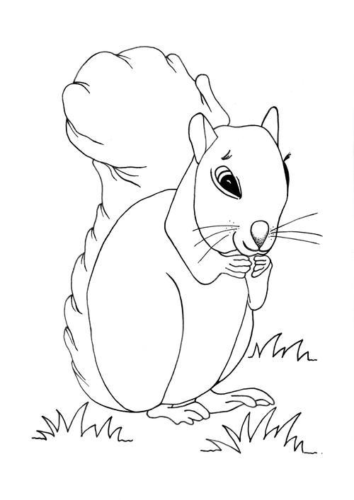 Cute Squirrel Coloring Page | AllFreeKidsCrafts.com