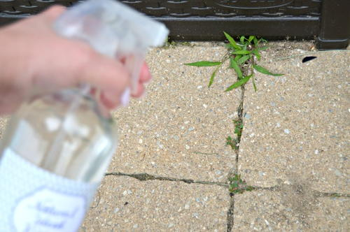 Budget-Friendly Homemade Weed Killer
