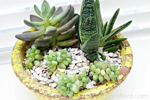 Growing and Caring for Succulents Tutorial