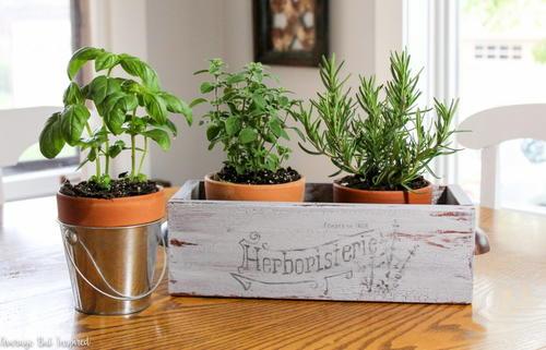 Stylish Indoor Herb Garden Box