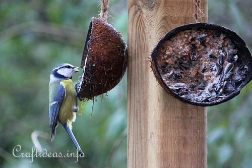 Homemade Winter Bird Food