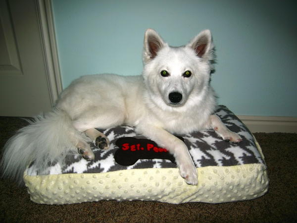 Personalized Pet Bed