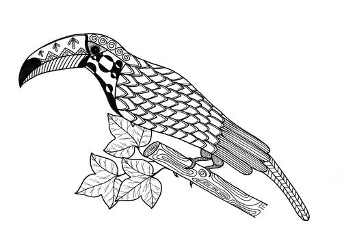 Toucan Coloring Page FaveCrafts