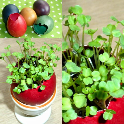Adorable Easter Eggshell Garden
