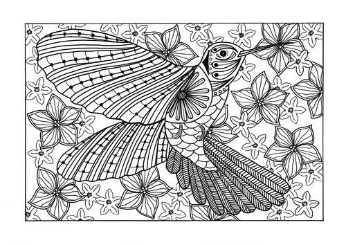 Hummingbird Adult Coloring Page | FaveCrafts.com