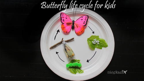 Butterfly Life Cycle for Kids : Metamorphosis