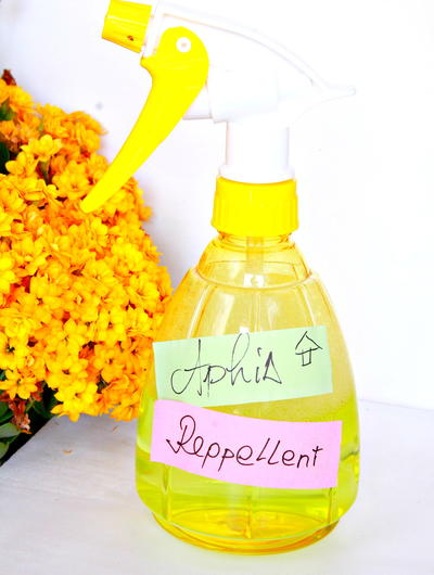 Natural Aphid Repellent